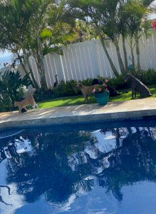 Photo of eco-friendly pool and pets